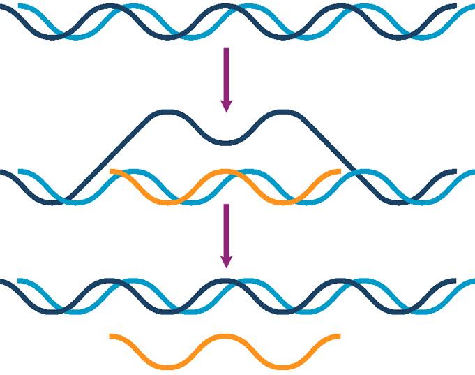 Матричный синтез молекулы ДНК